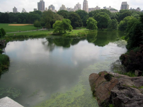 The Turtle Pond in New York City on a cloudy day